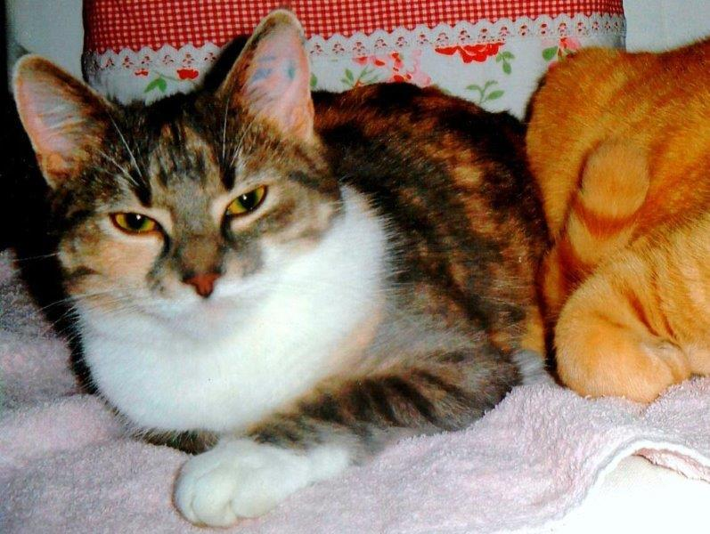 Katze vermisst in Hagenah