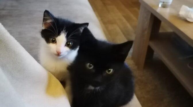 Zwei süße Katzenbabies