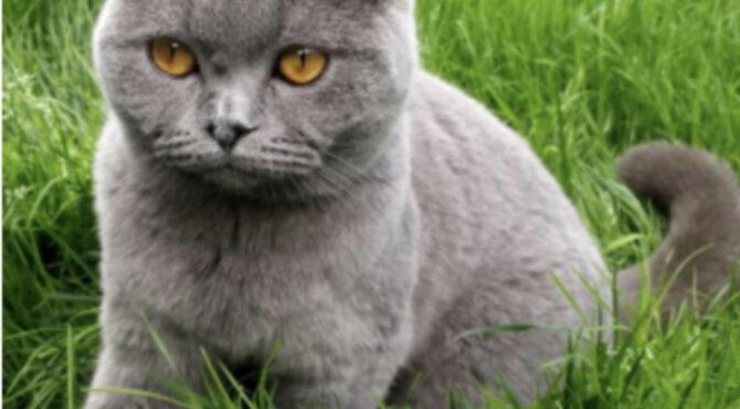 Katze in Steinkirchen entlaufen